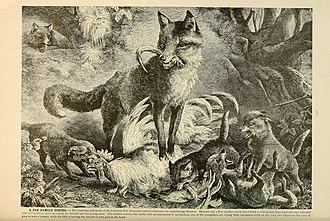Brehm's Life of animals (Page 233) (6220162149).jpg