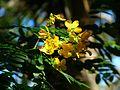 Brevard Zoo, Viera FL - Flickr - Rusty Clark (203).jpg