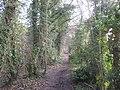 Bridleway in Hook Wood - geograph.org.uk - 2282599.jpg