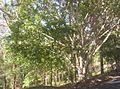 Brisbane-Forest-Park-1.jpg