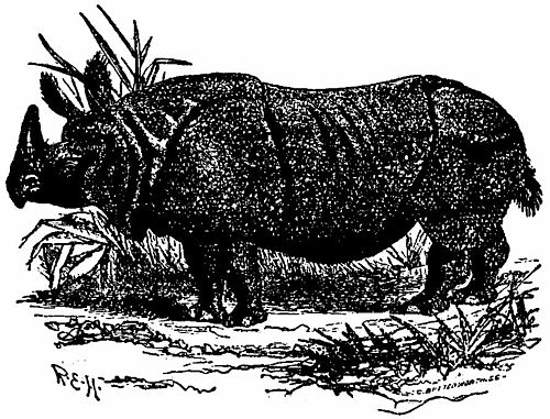 Britannica Indian Rhinoceros.jpg