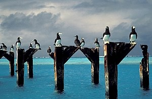 United States Minor Outlying Islands - Brown boobies atop pier posts at Johnston Atoll, September 2005