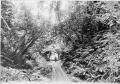 Bush tramway showing wooden rails, at Akatarawa, Price's Bush, circa 1903 ATLIB 336629.png