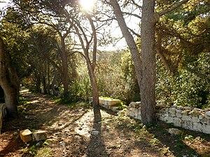 Buskett Gardens - Buskett Gardens