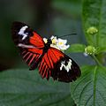 Butterfly at Chester Zoo 16.jpg