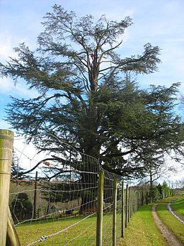 arbre pour jardin