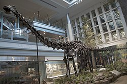 definition of diplodocus