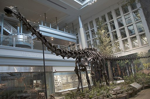 Carnegie Museum of Natural History - Virtual Tour