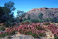CSIRO ScienceImage 1266 Australian landscape.jpg