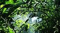 Cachoeira entre folhagem.JPG