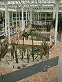 Cactus palacio.jpg