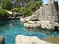 Californian Sea Lion Auckland Zoo.JPG