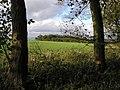 Canada Plantation from a Public Footpath - geograph.org.uk - 269914.jpg