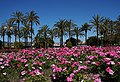 Cannes - flowers and palms.jpg