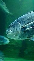 Cape Aquarium 20180719 211909 (8).jpg