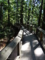 Capilano Suspension Bridge Park Walkway.JPG
