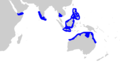 Graceful shark geographic range