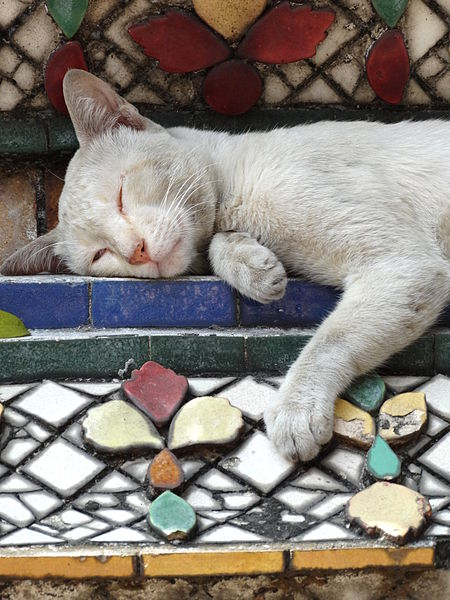 https://upload.wikimedia.org/wikipedia/commons/thumb/d/df/Cat_Snoozes_on_Stupa.jpg/450px-Cat_Snoozes_on_Stupa.jpg