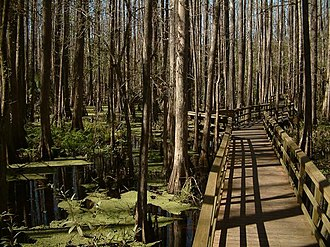 Highlands Hammock State Park - Image: Catwalk at highlands hammock sp