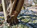 Chadwick Arboretum (31820788693).jpg
