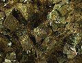 Chalcopyrite-159402.jpg