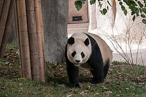 Chengdu Sichuan China Panda-breeding-and-research-center-02.jpg