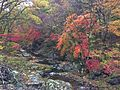 Chiaksan Foliage.jpg