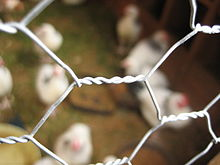 Chicken Wire close-up.jpg