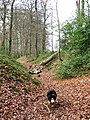Cholesbury Camp - Main Ditch with fallen tree - geograph.org.uk - 1201171.jpg