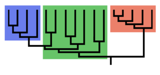 Monophyly - A phylogenetic tree: both blue and red groups are monophyletic. The green group is paraphyletic because it is missing a monophyletic group (the blue group) that shares a common ancestor—the lowest green vertical stem.