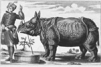 Clara (rhinoceros) - Image: Clara 1746 Elias Baeck