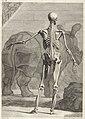 Clara Rhinoceros from Bernhard Siegfried Albinus TAB VIII - 1749.jpg
