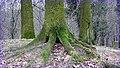 Claws - panoramio.jpg