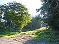 Clearing in the woods behind Graythwaite Hall - geograph.org.uk - 203363.jpg