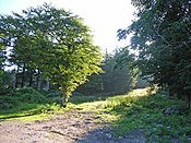 Clearing in the woods behind Graythwaite Hall - geograph.org.uk - 203363