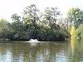 Clissold park lake - panoramio.jpg