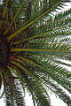 Close look palm tree.JPG