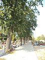 Cmentarz św. Antoniego w Toruniu2.jpg