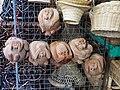 Coconut monkeys (10424757715).jpg