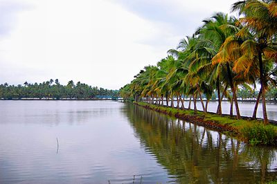 Coconut trees along salty inland water.jpg