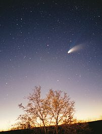Photo of the comet Hale-Bopp above a tree. Thi...