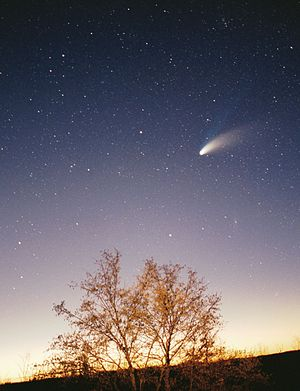 Hale-Bopp Comet above a tree, higher resolution, adjusted