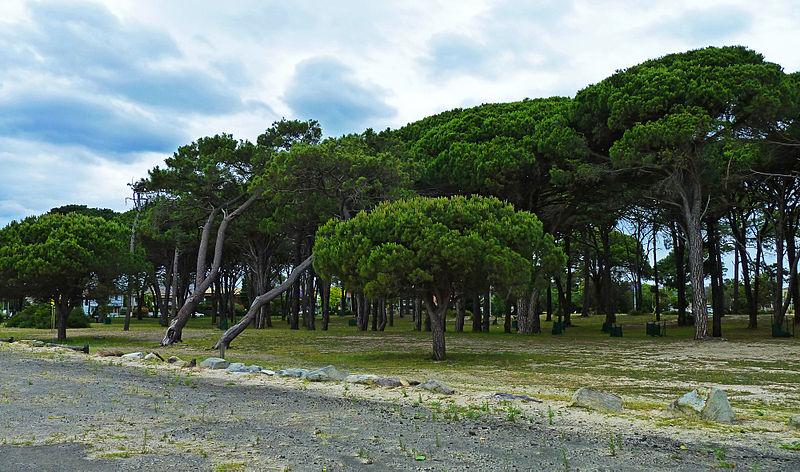 File:Cook Park, Sans Souci, New South Wales (2010-11-28) 07.jpg