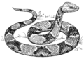 Copperhead (PSF).png