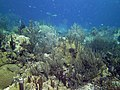 Coral Scene 22 (7157665743).jpg