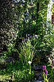 Cottage garden pondside wet border at Boreham, Essex, England.jpg