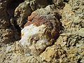 Cottonwood Limestone nodule, quartz.jpg