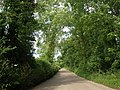 Country lane, near Franklin's Plantation - geograph.org.uk - 1350629.jpg