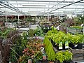 Covered plant area at Gardenworks - geograph.org.uk - 731138.jpg