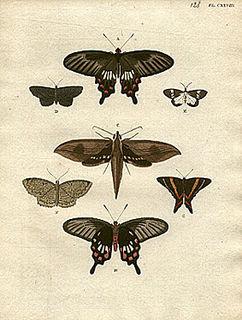 Pieter Cramer Dutch merchant and entomologist (1721–1776)
